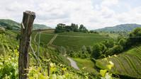 Veneto View