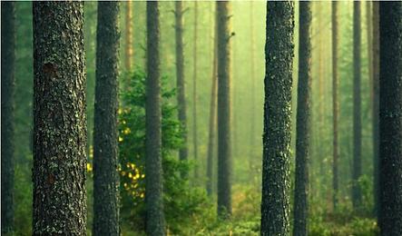 芬蘭森林綠色新興運動.png