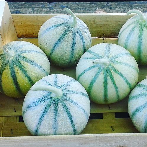 plateau melons