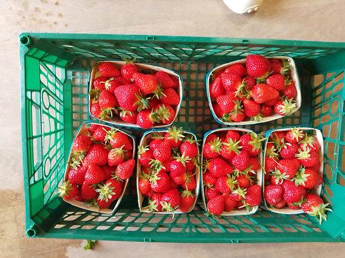 Promo fraises lot de 3kg
