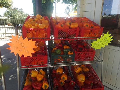 Lot de 5 kg de poivrons