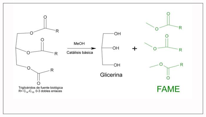 Reacción de Producción Biodiesel