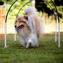 hoops_