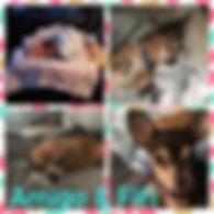Collage 2020-02-15 08_05_36.jpg