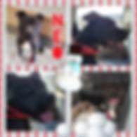 Collage 2020-01-19 19_36_10.jpg
