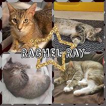 Rachel Ray.jpg