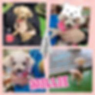 Collage 2020-01-18 20_58_03.jpg