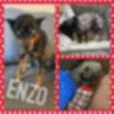 Collage 2020-03-30 18_48_23.jpg
