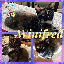 Winifred.jpg