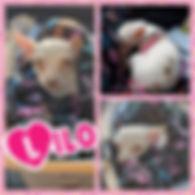 Collage 2019-12-26 17_18_17.jpg