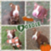 Collage 2019-11-09 14_29_58.jpg