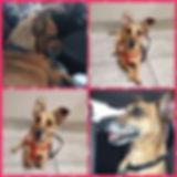 Collage 2020-01-14 21_02_27.jpg