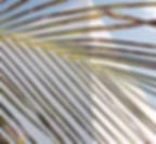 Screen Shot 2019-01-24 at 10.40.41 AM_ed
