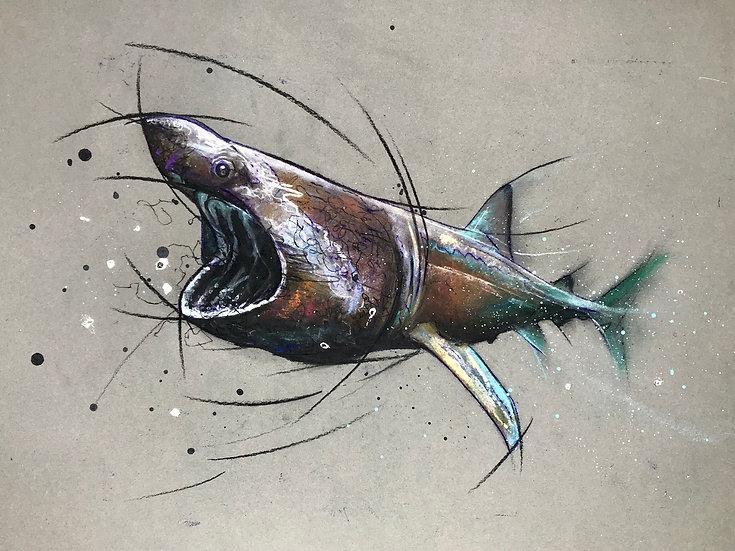 BASKING SHARK - Laura Cooper
