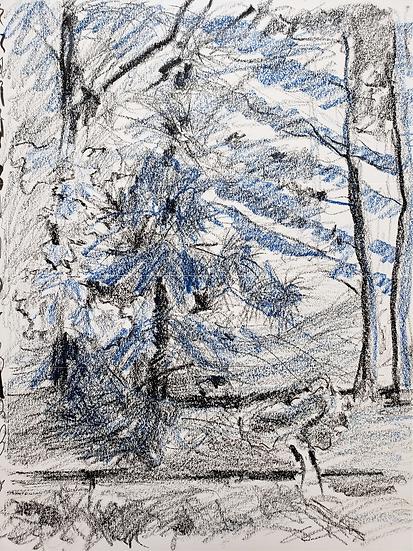 NORFOLK ISLAND PINE TREE - Isabel Mann