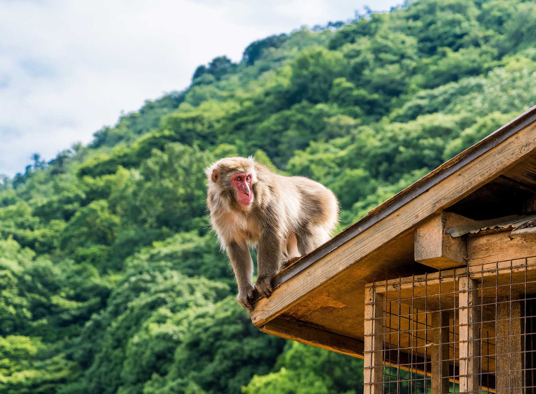 Afternoon Bamboo Forest & Monkey Tour