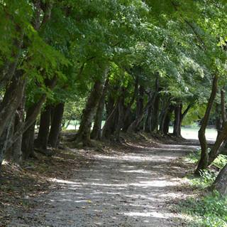 Path in Arashiyama, Kyoto