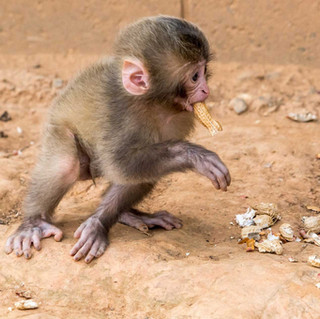 Cute Monkey in Arashiyama