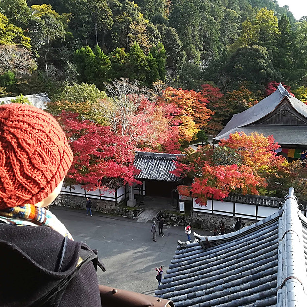 Lovely view of the autumn leaves in Kyoto, Japan