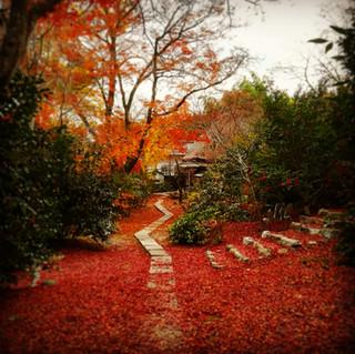 Kyoto Bike Tour - Autumn Leaves.jpg