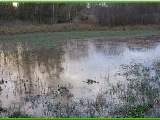 Connaissez-vous ces espaces naturels qui nous protègent des inondations ?