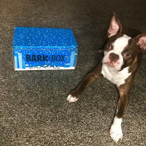 VIOL-ENT Network • Mixed Reviews: BarkBox Unboxing! IS IT WORTH IT?