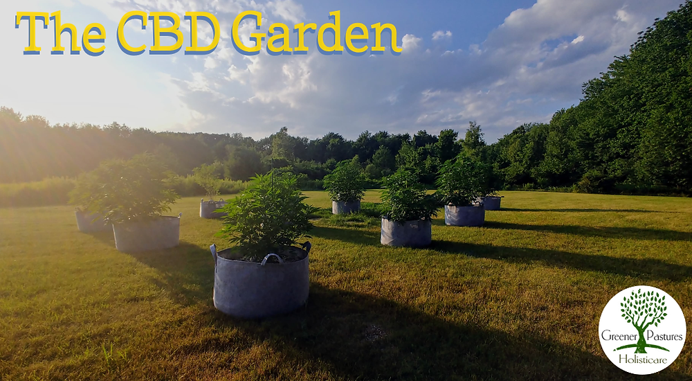 CBD for addiction recovery garden at Greener Pastures