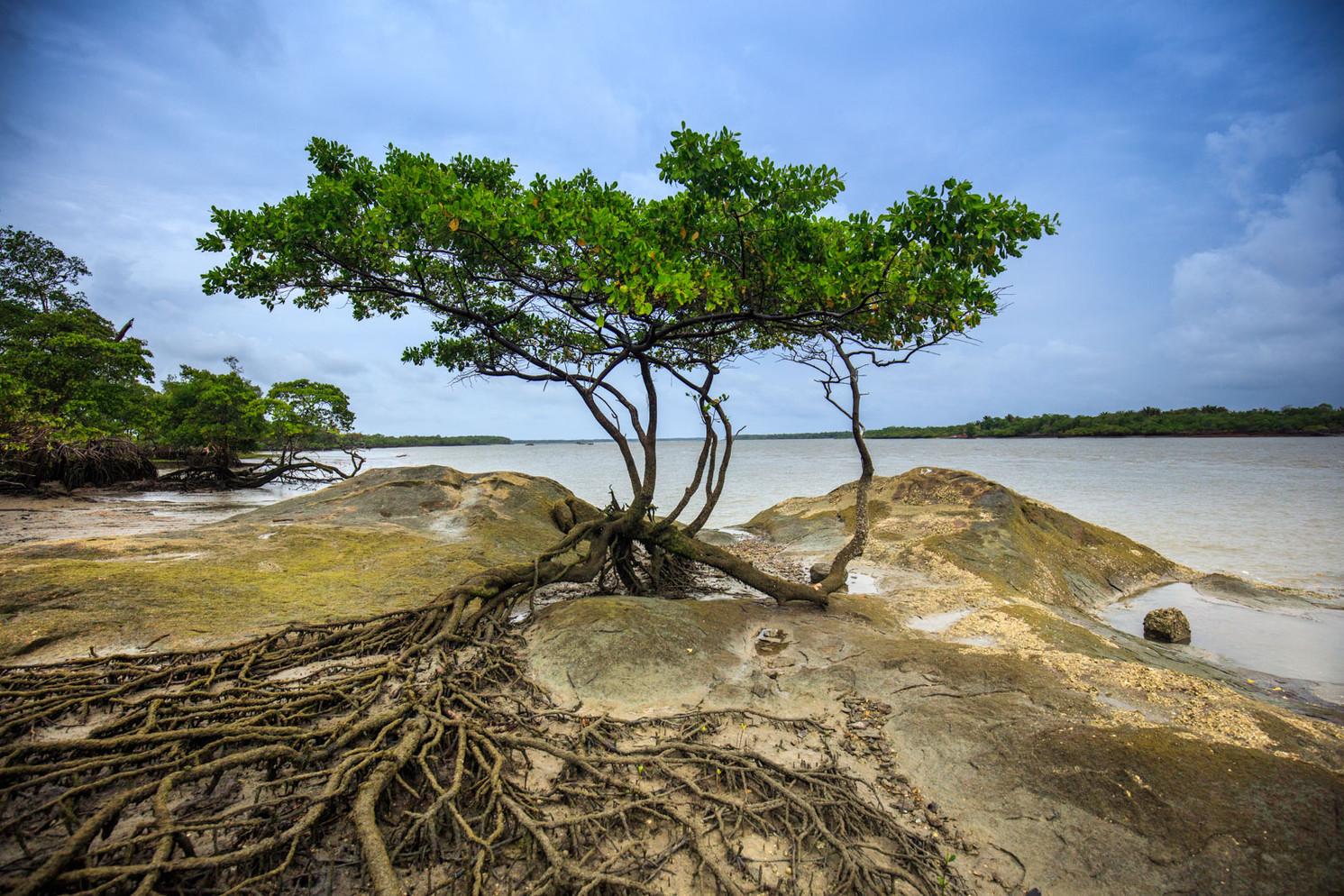 Carutapera - Maranhão