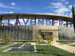 Alcodec_Lavender