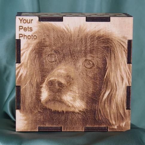 Dog Box Front.jpg