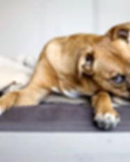Rescue Puppy