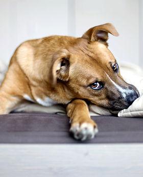 évaluation comportement chien 1