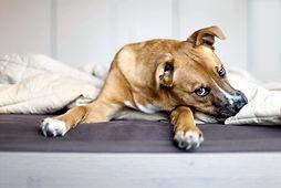 Perros, animales, mascotas