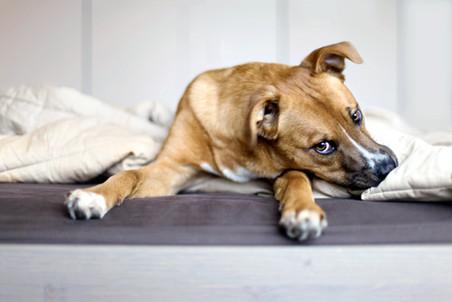 No logras que tu perro a la orden de ¡sientate! ¿se siente?... no todo depende del perro.