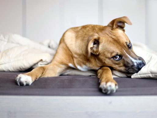 コロナウイルスに感染して入院する事になったら、愛犬はどうすれば良いですか?
