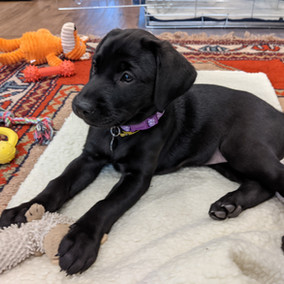 Economic Lessons From A Puppy