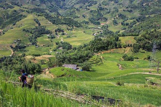 Mujer de Sapa en un arrozal.