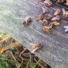 Defending the hive