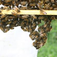 Making beeswax honeycomb