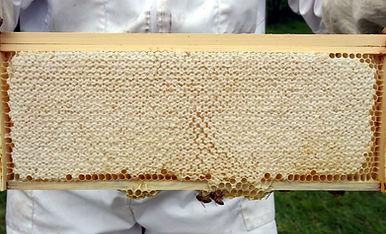 Frame of honeycomb.jpg