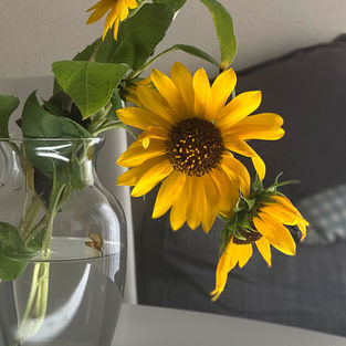 sunflowers-in-glass-vase-photo_streamofdreamsdesign_art_videos_.jpg