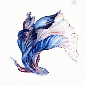 Blue Betta Fish Illustration