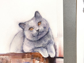 Where to begin a pet portrait?