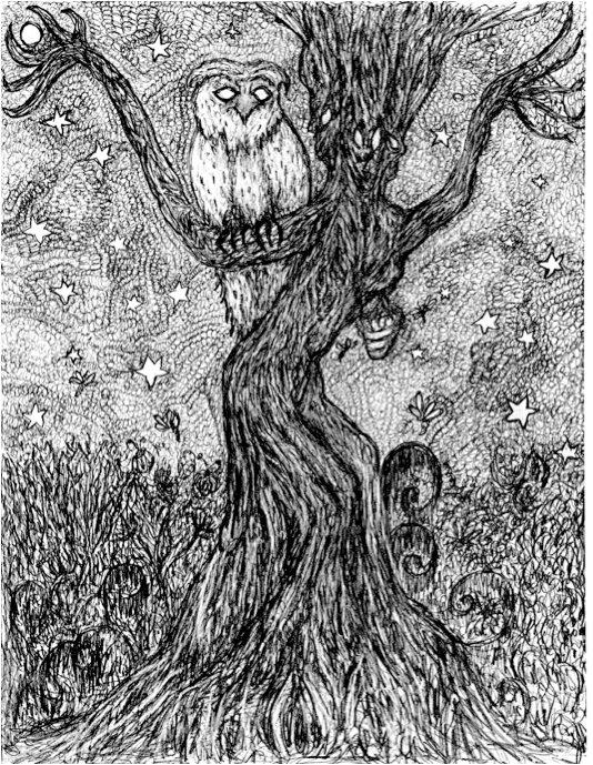 tree owl- pencil drawing
