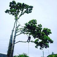 Tree felling servie bristol