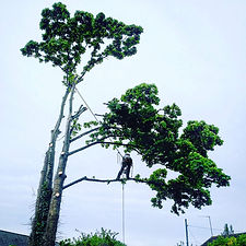 tree removal services bristol