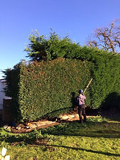 Hedge contractors bristol