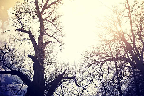 Dead Tree removal service bristol