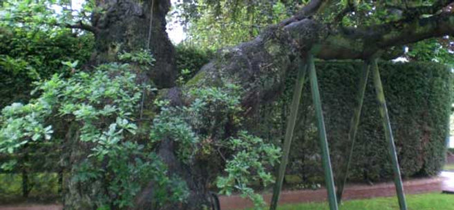 Bracing and propping trees
