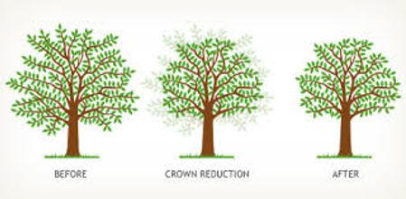 Tree reductin service bristol